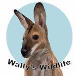 wallys.wildlife